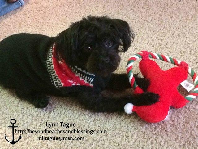 Panda, Yorkie-Poo, Santa Toy, Stampin Up demo Lynn Tague, see card and gift ideas at BeyondBeachesandBlessings.com #BeyondBeachesandBlessings
